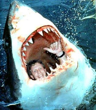 サメに食われ