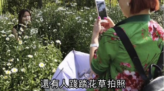 花を踏み潰して記念撮影する中国人の写真