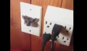 テレビソケットにはまったネズミの写真